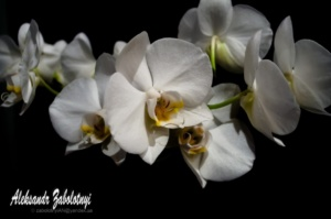 digital photography school, orchid photo