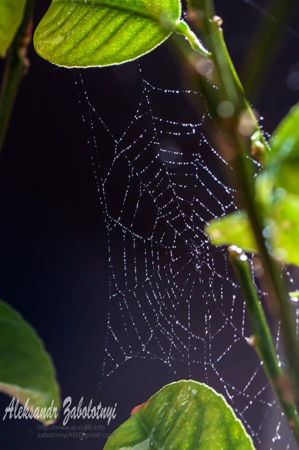 Предметная фотография паутина в лучах рассвета