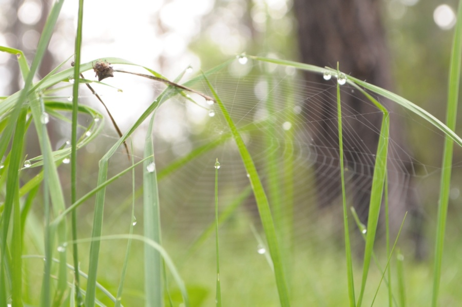завантажити безкоштовно фон трава з росою