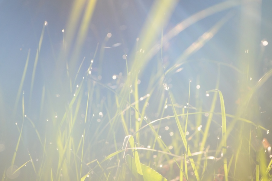 фон для скачування - трава в ранковому тумані