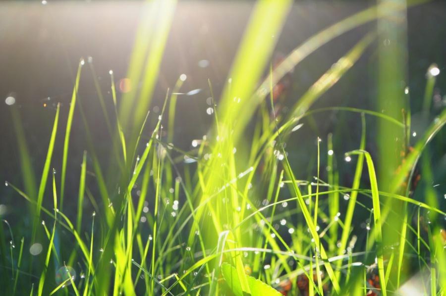 фон трава в промені сонця завантажте безкоштовно