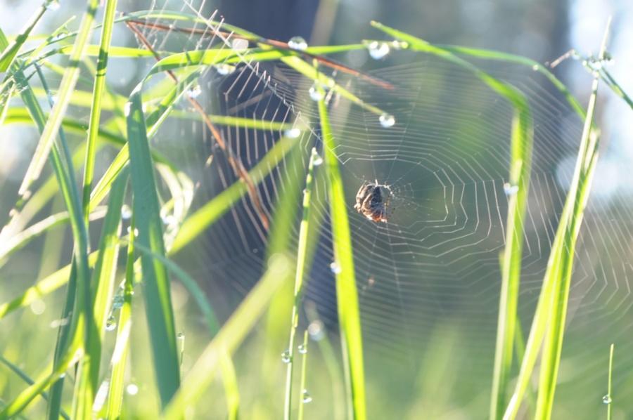 фон павутина в траві - завантажуйте вільно