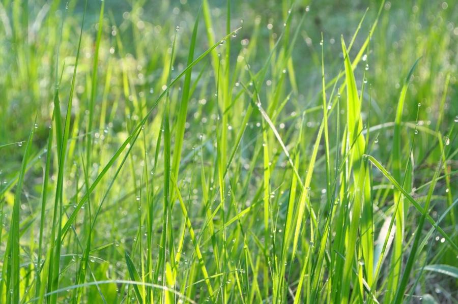 зелена трава в фокусі - фон для завантаження