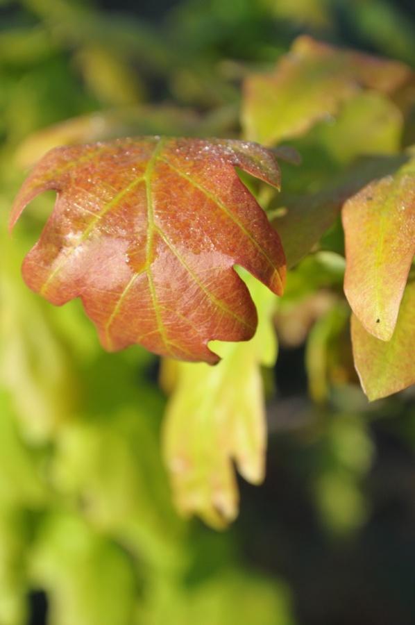 фото для фона жовто-зелений лист з росою