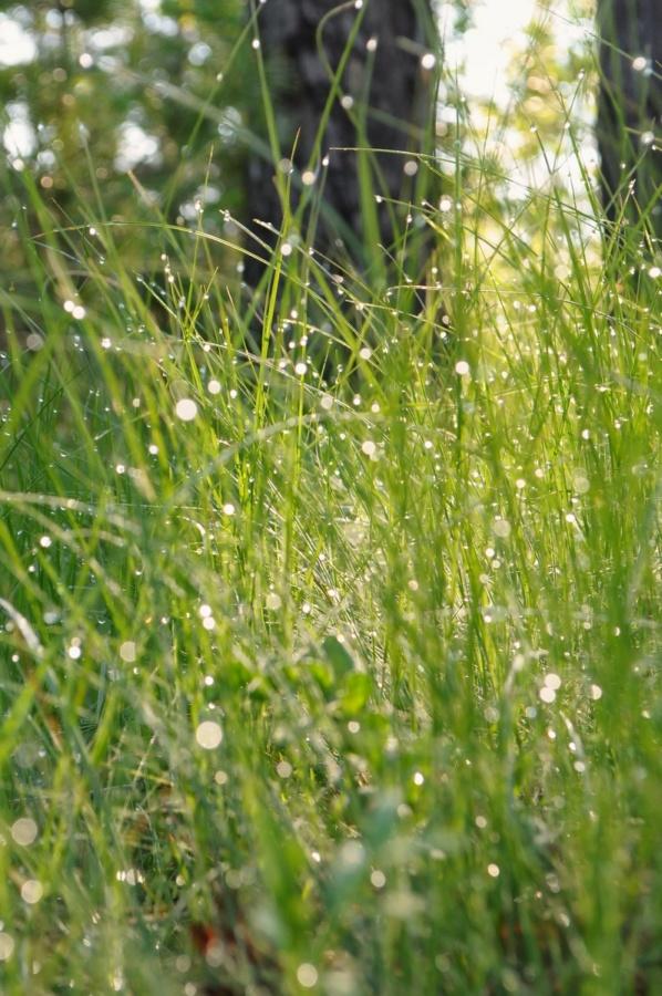 картинка трава з росою в сонячних променях завантажити безкоштовно